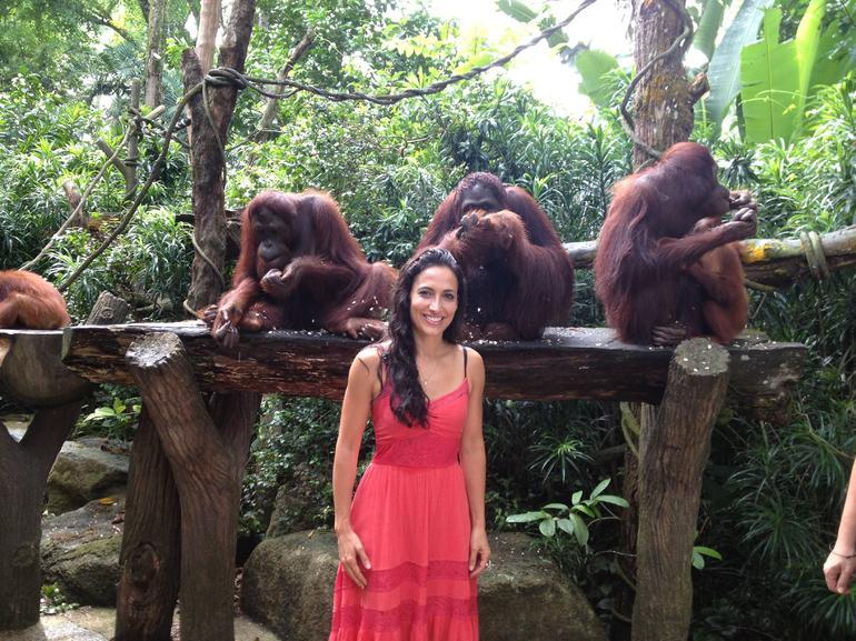 singapour-zoo-visite-les-orangs-outans