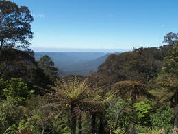 Blue mountains , Edrie M - November 2016