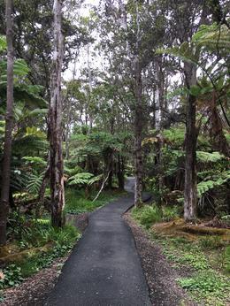 Rain Forest walk after the lava tube , Dana F - July 2017