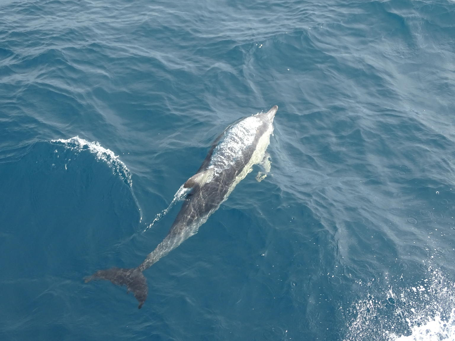 MORE PHOTOS, Auckland Dolphin and Whale Watching Eco-Safari Cruise