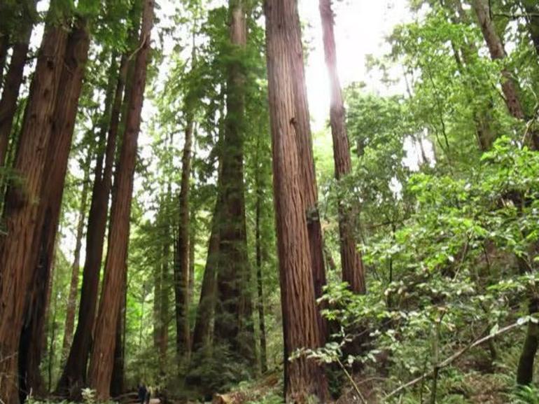 Muir Woods - San Francisco