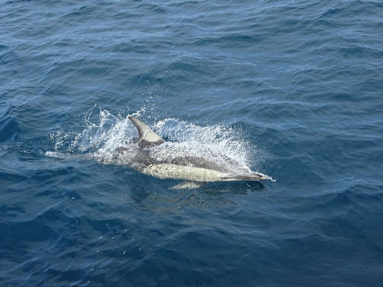 Auckland Dolphin and Whale Watching Eco-Safari Cruise