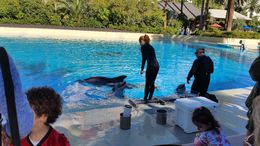 Siegfried and Roy's Dolphin habitat at Mandalay Bay. , ashes - February 2016