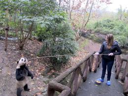 Feeding the pandas in the outdoor enclosures! , Sydney G - December 2013