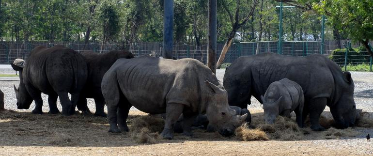 rhino`s - Bangkok