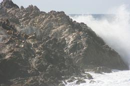 Sea lions basking on rocky islet off Pebble Beach, Gordon C - April 2010