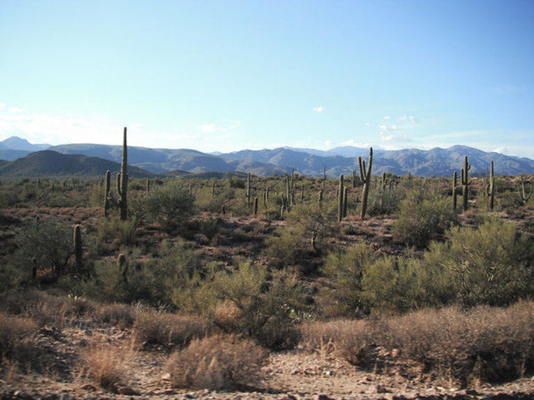 The Sonoran Desert - Phoenix