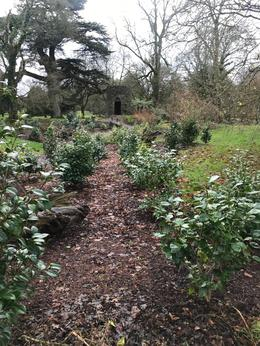 The Poison Garden at the Blarney Castle Grounds , Sara - December 2017