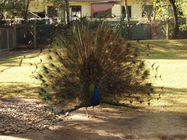 At a park - Sydney