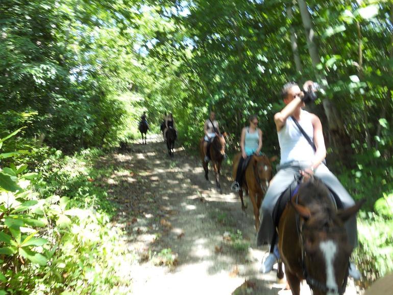Calm Horses - Jamaica