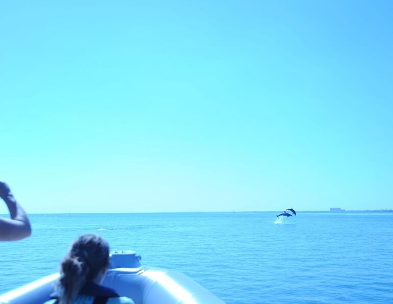 Dolphins - Miami