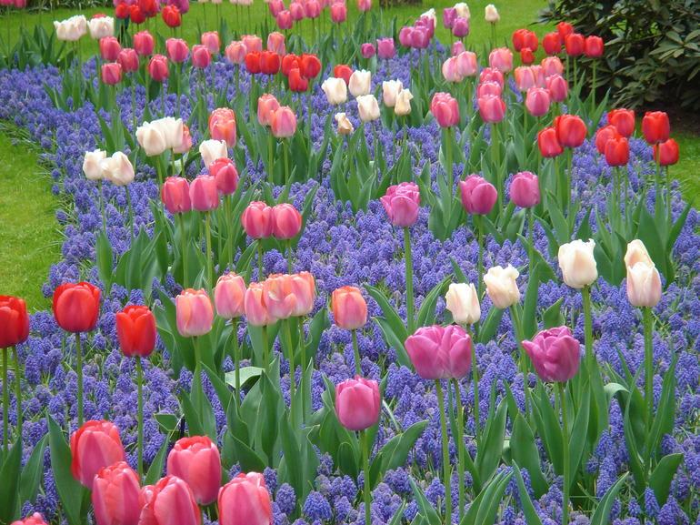 Every blossum perfect - Amsterdam