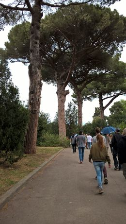 I couldn't have imagined what was just around the bend as we passed under Pompeii's lovely umbrella trees - a city like no other in the world... , Karen D - May 2016