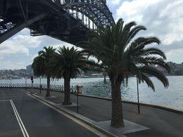 Sydney City Tour by Double-Decker Coach with Transparent Roof, Michelle B - March 2015