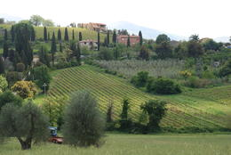 View of Tuscany and villas , Margaret K - June 2017