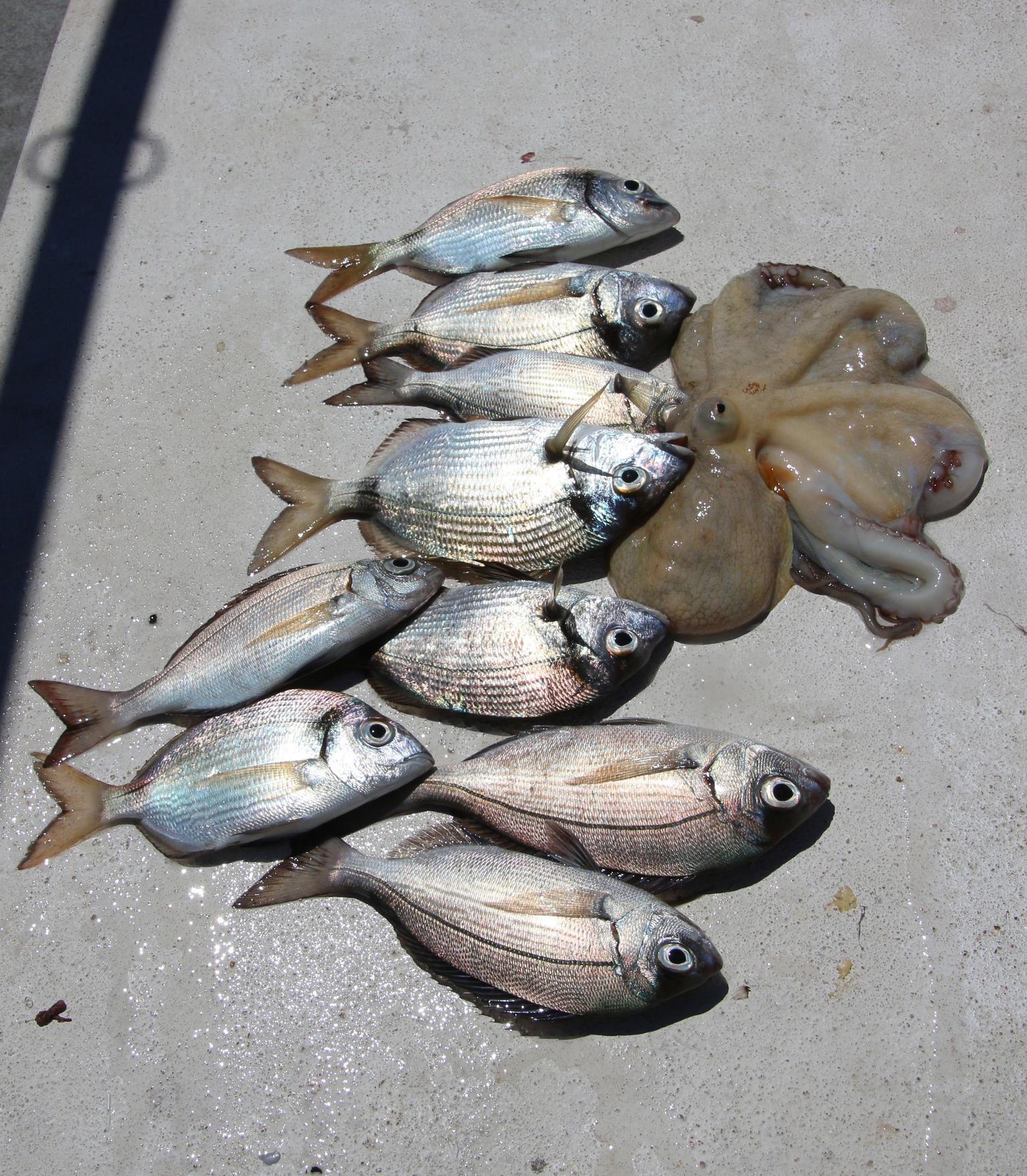 MAIS FOTOS, Pesca de meio dia em recife saindo de Albufeira