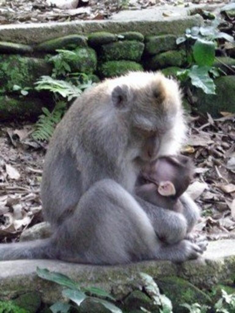 Mommy and baby monkey -