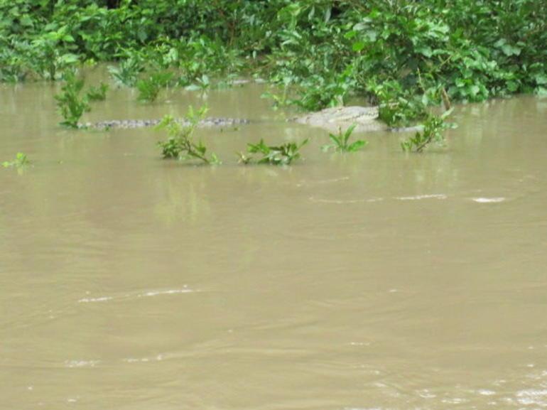 Bebedero River Boat Tour from Guanacaste