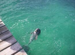 Cancun Dolphin Swim Adventure - ready for fun - June 2008