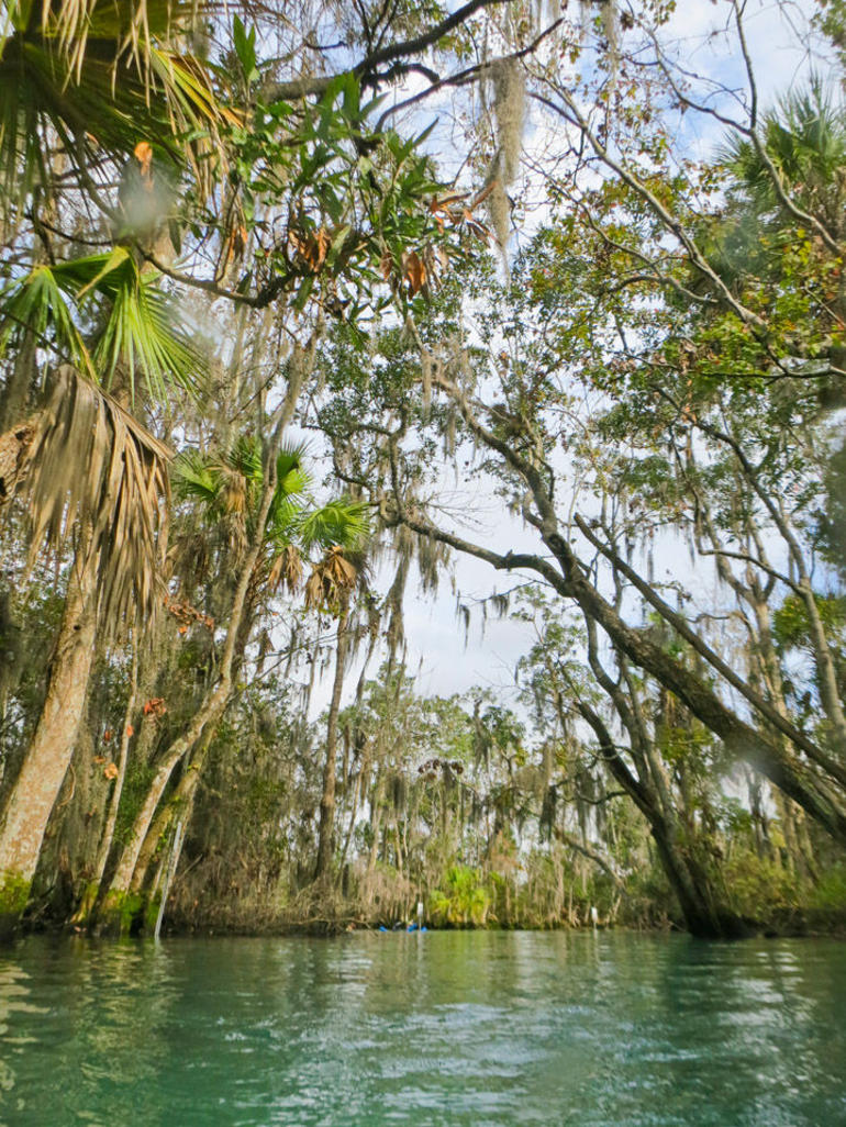 Swim with Manatees on the Crystal River - Orlando