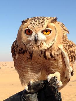bird and wildlife experience so worthwhile , Susan E R - December 2013
