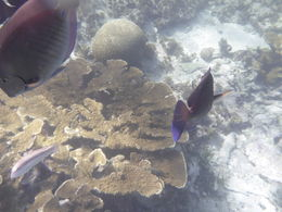 Blue angelfish, elkhorn coral and brain coral. Photo taken with an underwater camera during the snorkeling segment of the Isla Contoy tour. , mclellan91 - November 2015