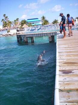 Greeting from the Dolphins on arrival to Isla Mujeres - June 2008
