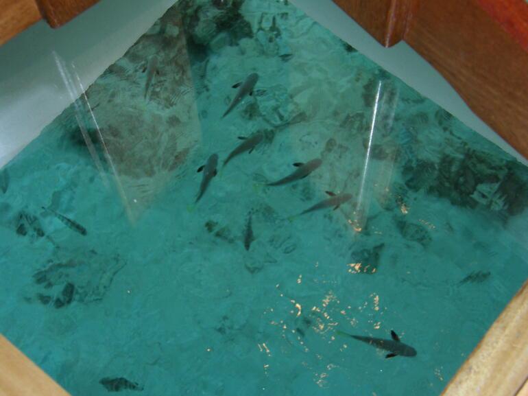 Fish - Tahiti