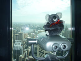 Katy Koala visiting the Sydney Tower - great views! , Eric M - November 2012
