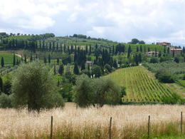 One of the Landscapes from Montalcino , Kenneth Z - July 2014