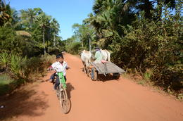 A very bumpy road when the road has potholes, and the ox-cart has no suspension. , Gary M - January 2015