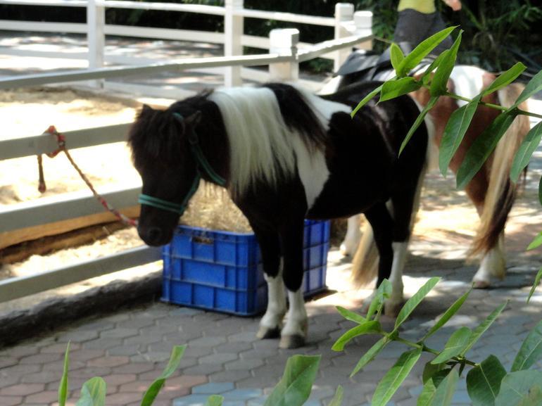 pony - Bangkok