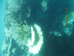 Reef from semi-submersible , Linda W - March 2017