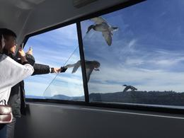 feeding ducks on the fly from the lake cruise boat , Matthew U - September 2016
