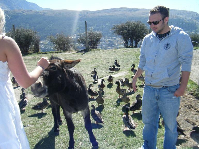 Feeding the animals - Queenstown