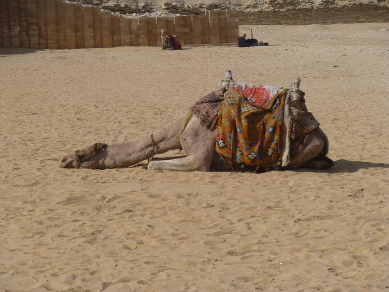 I'll just have a little rest between tourists - Cairo