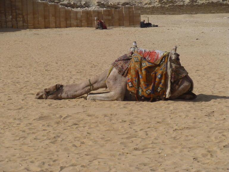 chameau-balade-touristique-excursion-egypt