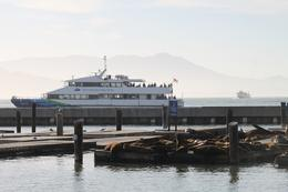 Ferry and sea lions at Pier 39 where we boarded the catamaran. , Linda F - June 2013