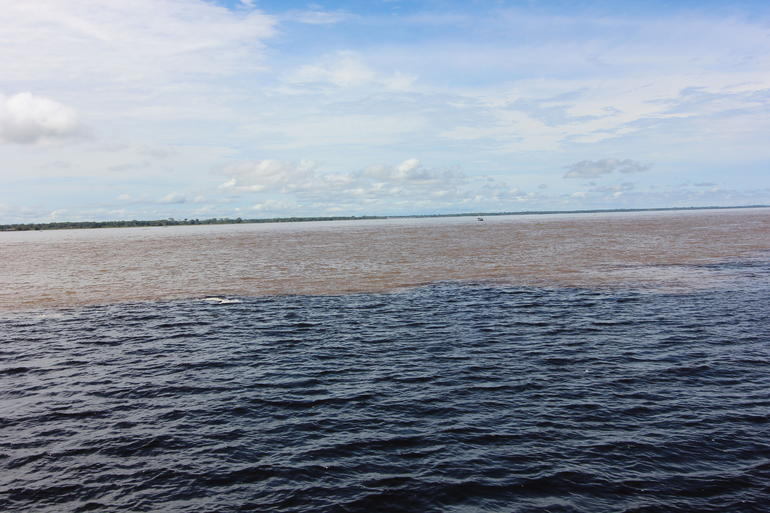Rio Negro Cruise from Manaus to the Amazon River photo 24