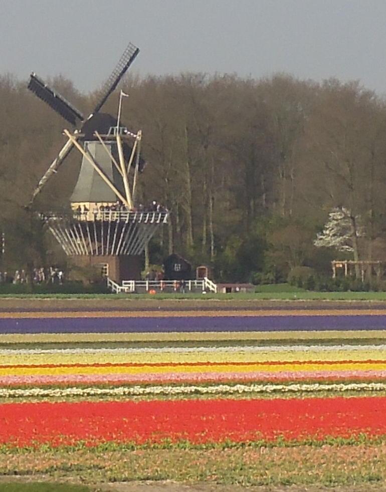 Windmill at Keukenhof - Amsterdam