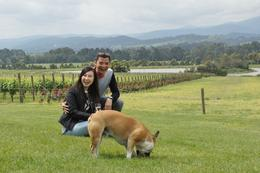 Photobombed by a happy and cute bulldog at Domaine Chandon. , Wei Keong - November 2016