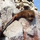 Viagem diurna pelas Ilhas Ballestas e pela Reserva Nacional de Paracas saindo de Paracas, Paracas, PERU
