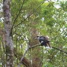 Recorrido de día completo de trekking por el Parque Nacional de Springbrook, Brisbane, AUSTRALIA