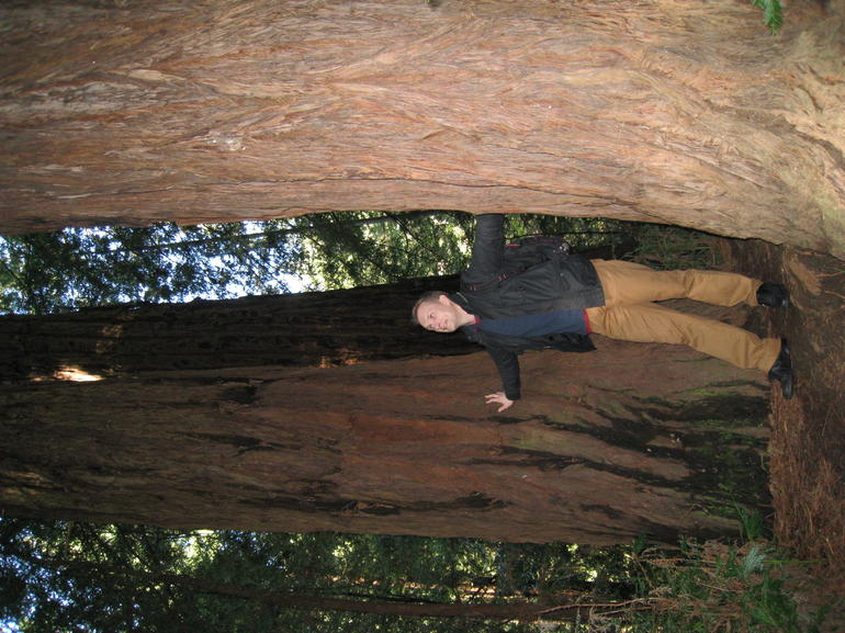 Muir Woods! - San Francisco