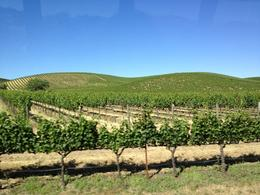 Vineyard, Jules & Brock - July 2012