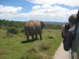 Addo Elephant Park, HTravelerUK - October 2013