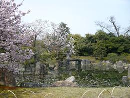 Garden in Nijo Castle, sakura petals in the pond, a rare moment when the picture isn't crowded with other tourists., Sue C - April 2008
