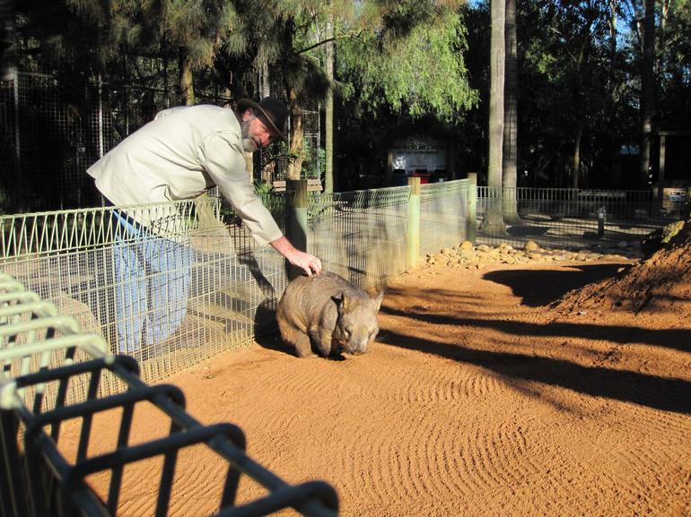 Petting a Wombat - Sydney
