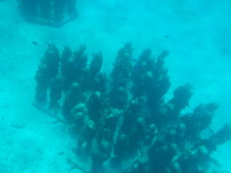 This is some of the items you will see while snorkeling. , nora - August 2015
