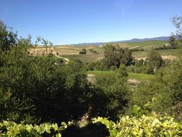 Beautiful wine country, Jules & Brock - July 2012